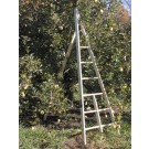 Baldwin Wooden Tripod Apple Ladders