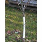 Rainbow Professional LTD White Spiral Tree Guards, 24 inch